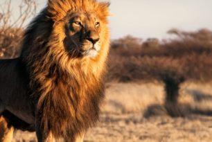 S4/HANA – Die Höhle des Löwen